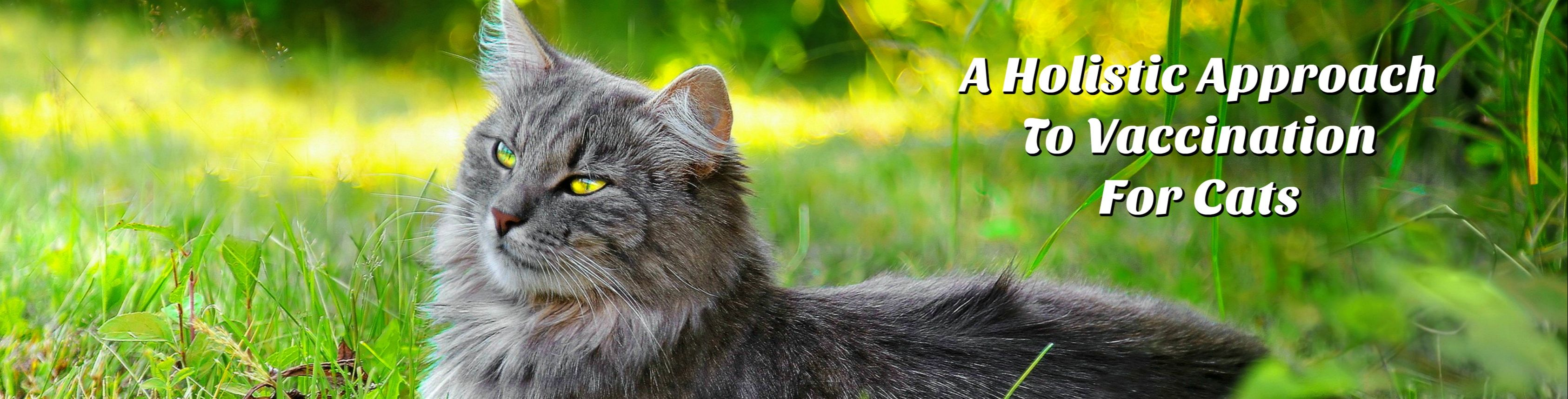 A Holistic Approach To Vaccination For Cats - Holistic And